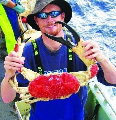 游客捉到的海蟹。