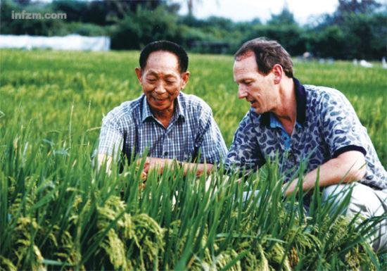 袁隆平:杂交稻亩产1500公斤都有可能