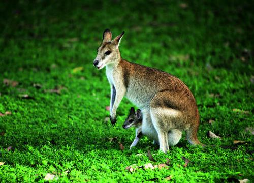 旅游业是澳大利亚发展最快的行业之一