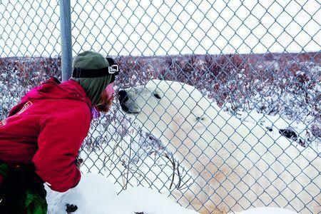 与北极顶级掠食者亲密接触
