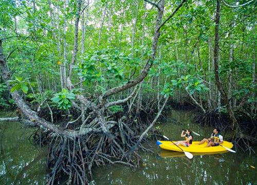 走丛林小径,遭遇猴子和巨蜥