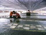 福建渔业――鲍鱼工厂化养殖场