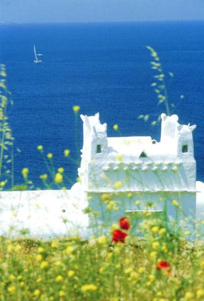 蒂诺斯岛(Tinos) 正在山花烂漫时