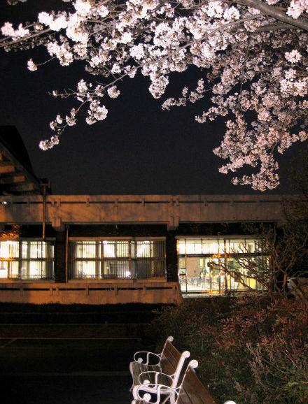 在韩国,4月就是属于樱花的季节