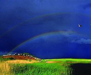 吉林向海国家级自然保护区