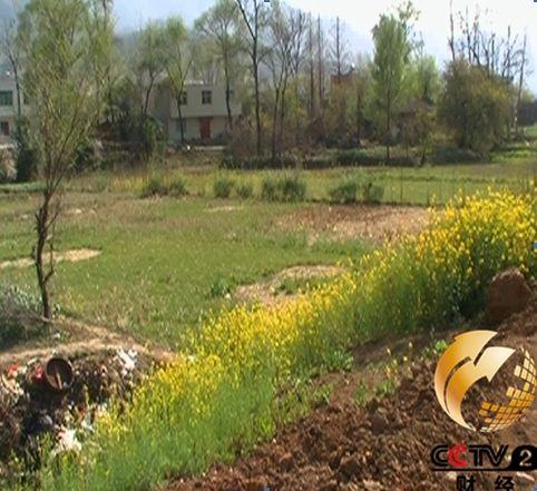 房县政府办公楼建设区域内是废弃的基本耕地