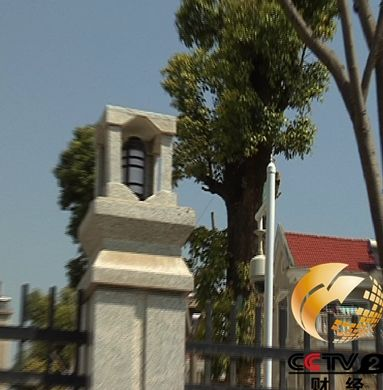 房县财政局移植的古树,一棵价值几十万