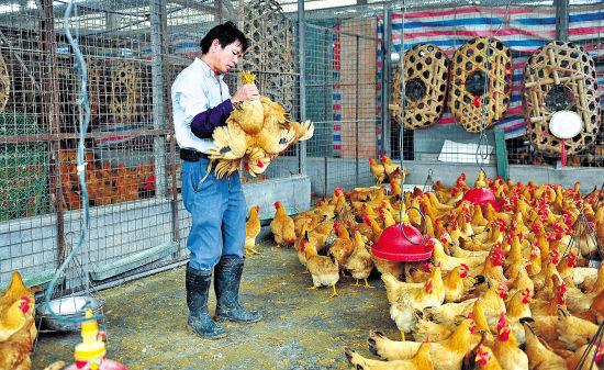 禽上市公司首季度亏损逾3亿:H7N9重创业绩 H