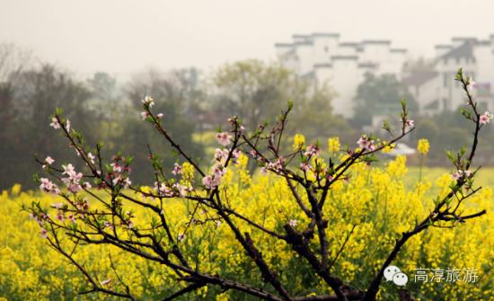 高淳国际慢城金花旅游节