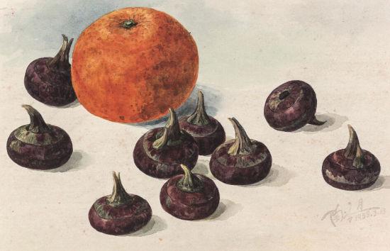 陶冷月 柑橘荸荠 1955年 纸本水彩 15.5×24cm 出版:《陶冷月》,上海书画出版社,2005年,第540页 RMB 180,000-220,000