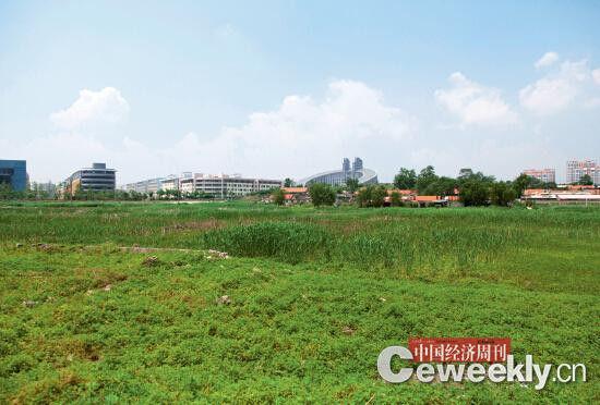 文安村的农田早在几年前已被征收,因一直未开发而荒废。《中国经济周刊》记者 邹坚贞 摄