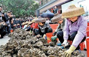 在金蚝节上,开蚝比赛是重头戏。图为蚝民们在手脚麻利地比赛开蚝。