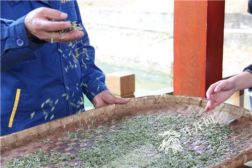 非遗大师全程手工炒制的今春第一批定心手工茶 重庆茶业集团供图 华龙网发