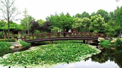 开窗见绿、出门进园,小游园成为洛阳市民休闲好去处