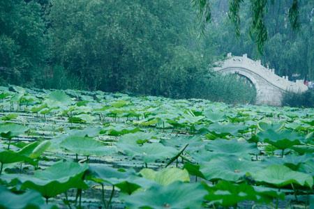 寻找绿色发现未来 中关村科教旅游节体验游