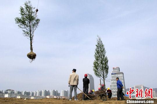 """近日,一则青岛为打造""""国家森林城市""""而""""毁草种树""""的消息将该市推向"""