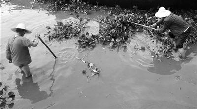 7月12日,云南昆明滇池,部分水域出现大量蓝藻。 新华社记者 秦晴 摄