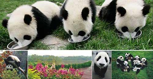 大熊猫生态园