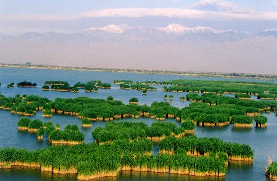 宁夏沙湖:藏在丝绸之路上最后的宝藏(组图)