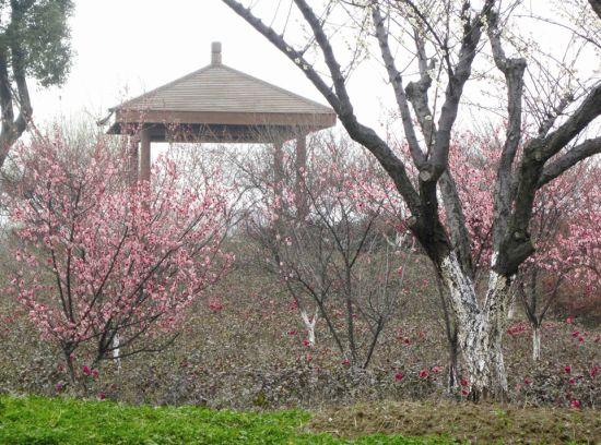 到太湖湿地 寻苏州最早的春天(图)