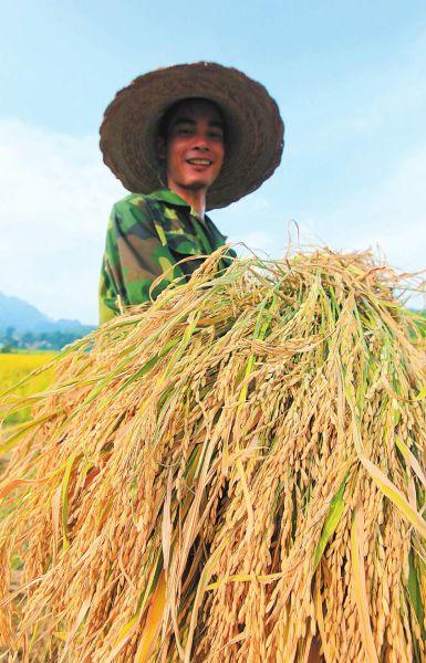 柳州农民冒高温收粮忙 天热心更热