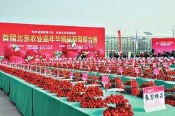 首届北京农业嘉年华 小草莓长出大产业