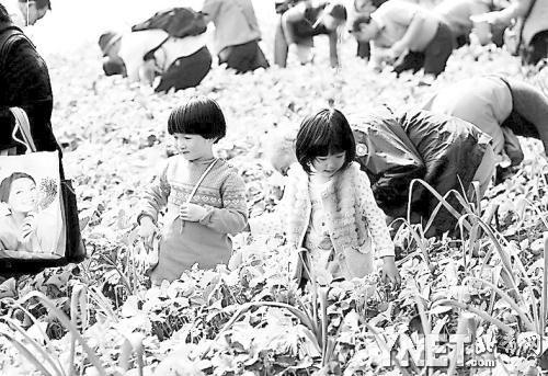70余北京青年报读者参观农业嘉年华