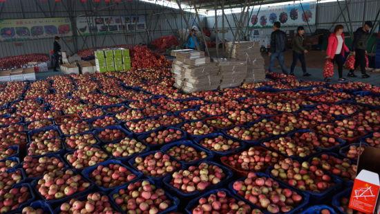 北京市延庆区第二届八达岭苹果文化节举行
