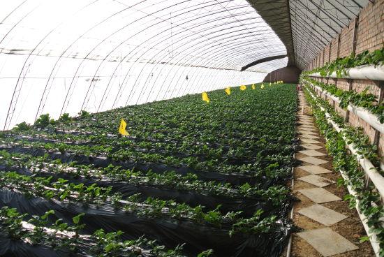 """""""北京蔬菜好园区""""之北京北郎中诺金蔬菜种植专业合作社"""
