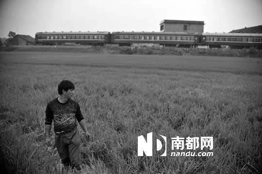 5月19日,湖南攸县大同桥镇,村民在田间耕作。村民对于大米镉超标也十分困惑。  南都记者 林宏贤 摄