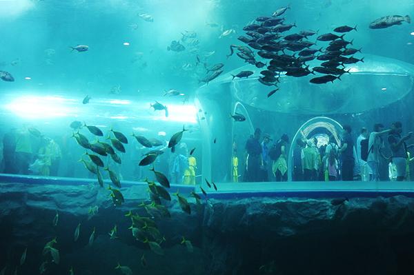 中国人游丽水世博:畅享环保视觉盛宴