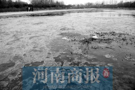 郑州西流湖污染严重 污水值最高超标110倍(图)