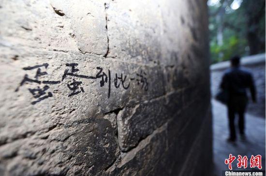 """北京红叶节成""""红叶劫"""" 游客""""攀爬刻""""行为屡现"""