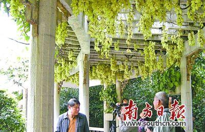 期待!2020年广州出门几百米就有公园