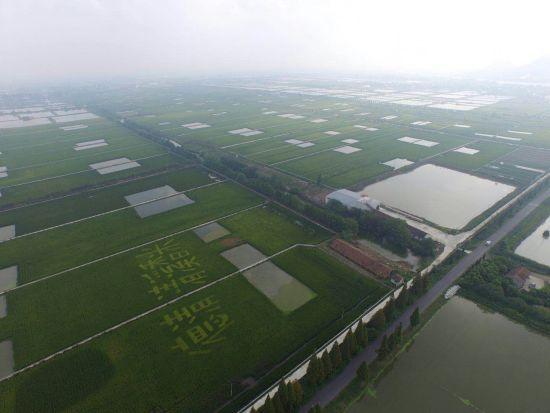 浙江德清:民宿规范成国家标准 探城乡一体发展新径