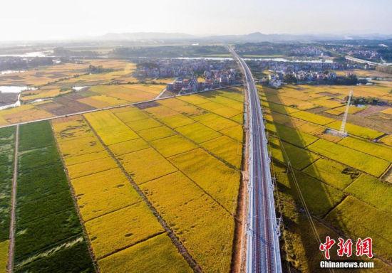 航拍即将通车的九景衢铁路 穿越金黄田野
