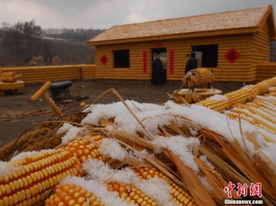 """2万个玉米一比一造""""黄金屋院"""""""