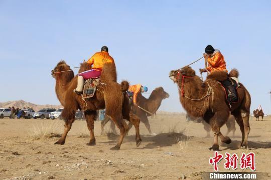 """内蒙古打造""""骆驼盛宴""""祈福草原风调雨顺"""