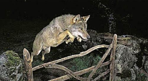 09年度世界野生动物摄影大赛冠军作品涉嫌造假