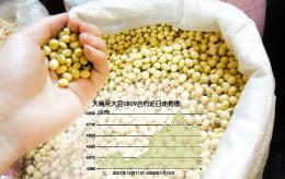 多重因素共同发酵国内豆价暂低高昂的头