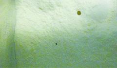 美赞臣奶粉被曝保质期内长虫 消费者投诉遭推诿