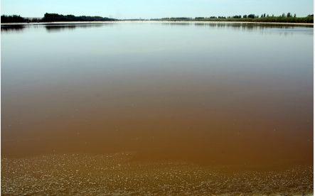 被污染的乌梁素海