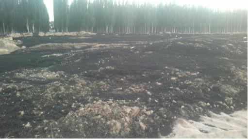 污泥非法填埋场