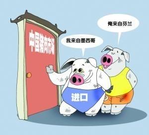 洋猪肉:进口量增价扬
