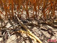 美国:遇56年来最严重干旱