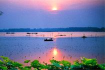济南白云湖:捞鱼挖藕