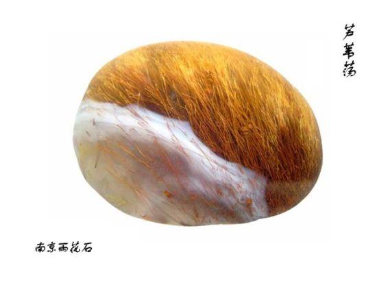 南京雨花石——芦苇荡