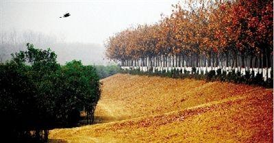 郑州天河路 不论哪个季节都是风景(图)