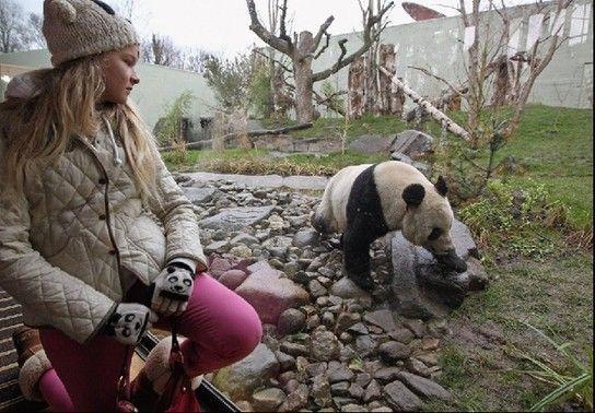 英企鹅嫉妒中国熊猫受宠向游客投粪便表抗议