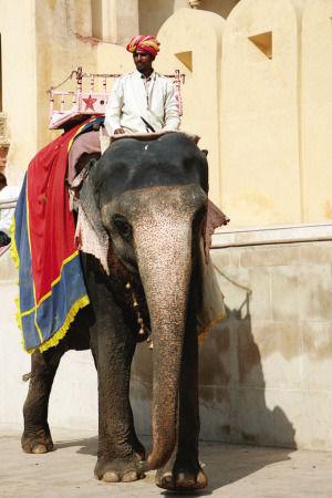 """印度""""红粉之城"""":骑着大象看琥珀堡(组图)"""